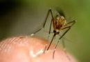 Highland Park to Conduct Mosquito Ground Spraying
