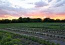 Faith-Inspired Farm a Refugee Haven