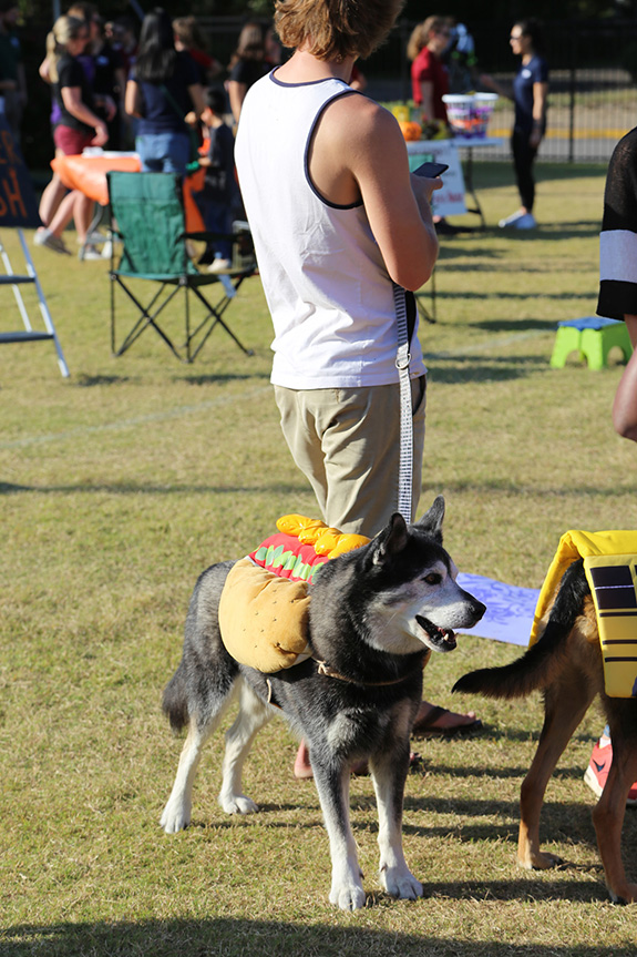 Cookies, hot dogs and chips and fun and games and a photo shoot were all part of Saturday's Parade of Pooches at the Moody Family YMCA
