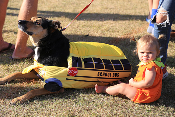 June Auers, 11 months, sits with family dog George, who was dressed as a school bus.