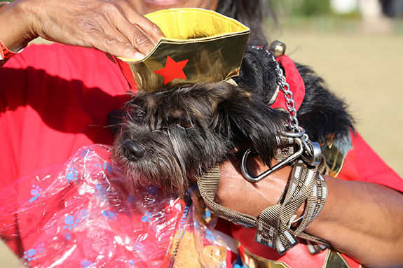 Pet owners dressed up their family dogs for Saturday's Parade of Pooches at the Moody Family YMCA.