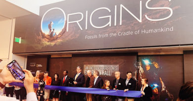Fossils from the Cradle Now at the Perot