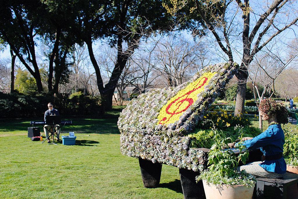 Piano Succulent